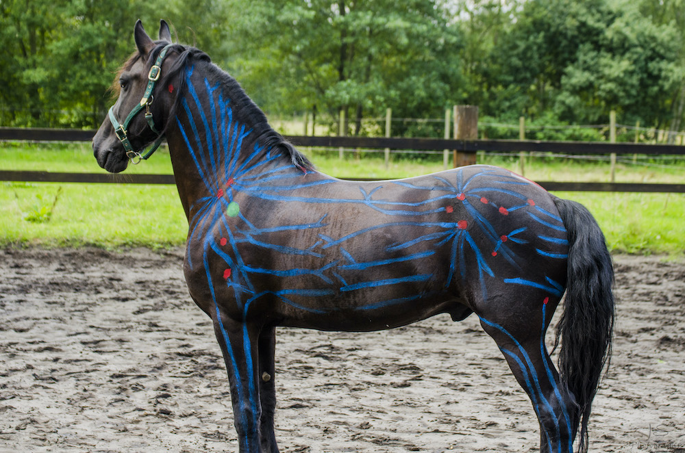 lymphatic system painted on a horse