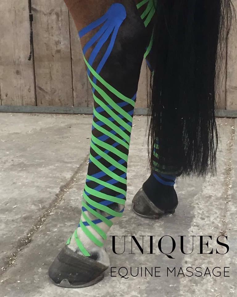 sportpaard met lymfetaping ter voorkoming van stalbenen